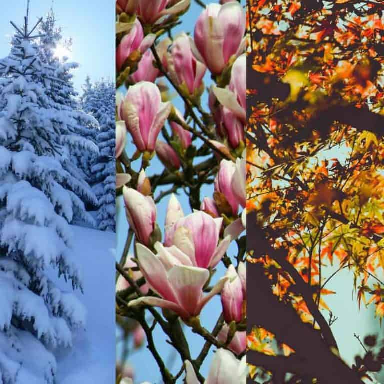 4 Seasons of Waiting on God For Your Needs